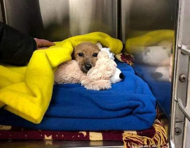 Парень спас жизнь щенку, которого со скотчем на мордочке выбросили под мост нелюди
