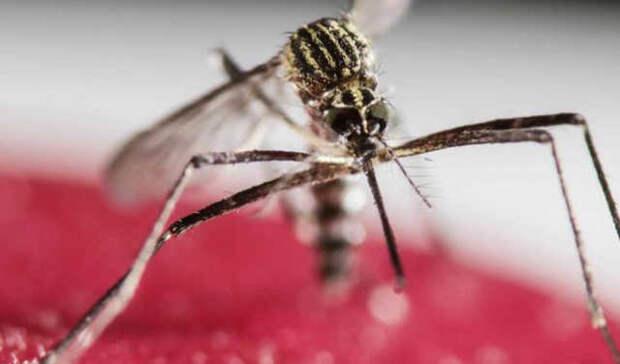 Генно модифицированные комары будут выпущены на природу во Флориде. Население против