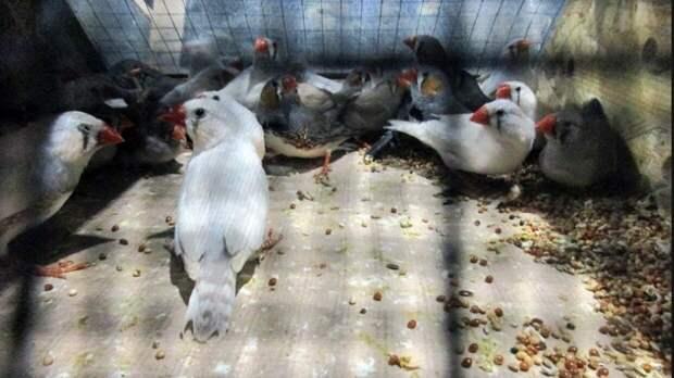 Похитителю попугаев из Приморья грозит до десяти лет тюрьмы