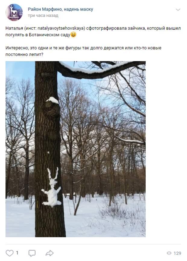 Фото дня: в Ботаническом саду на дереве появился снежный заяц