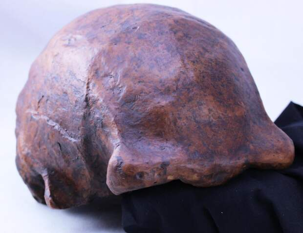 В Кении обнаружили самые древние кости первых прямоходящих