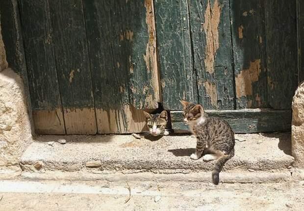 Кошачий переговорщик. Гудок Филимоновых