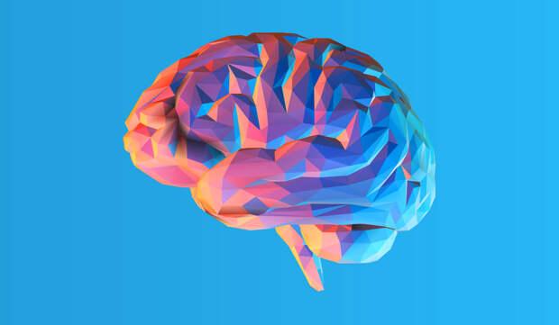 Нейропластичность головного мозга —что это такое и как ее развивать?