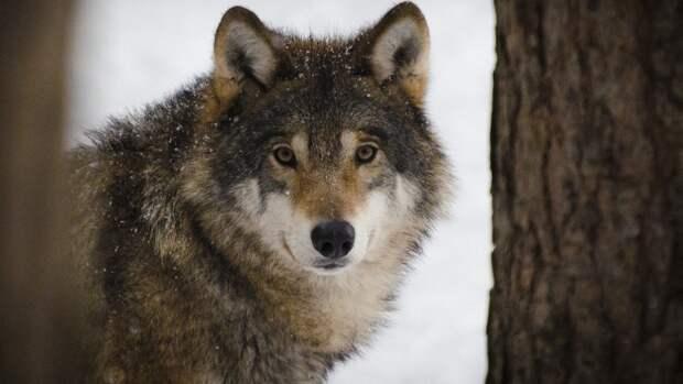 Рядом с логовом волков под Челябинском обнаружили скелет человека
