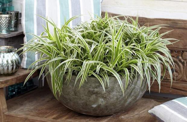 8 растений, которые прекрасно живут на кухне