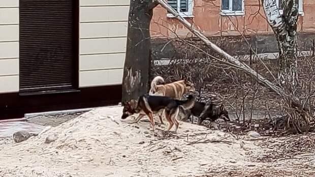 Бродячие собаки загрызли четырех обитателей калининградского зоопарка