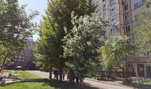 Автострада вместо деревьев. Жители Оренбурга возмущены расширением парковки водворе