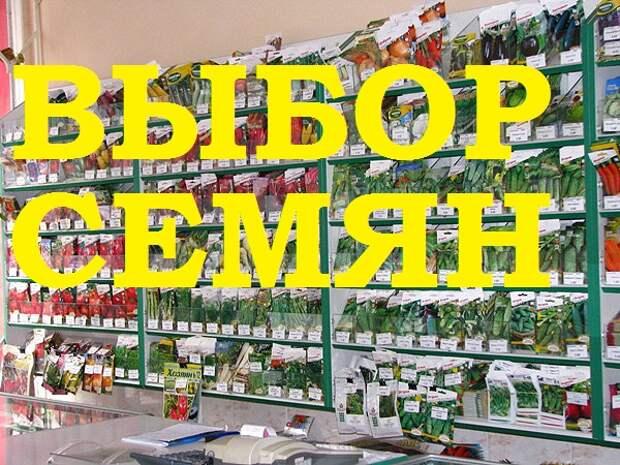 Выбор семян в продаже - важный этап.