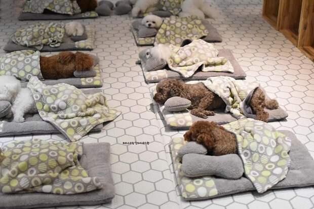 Милые щенки всего лишь спят, но на это можно смотреть вечно