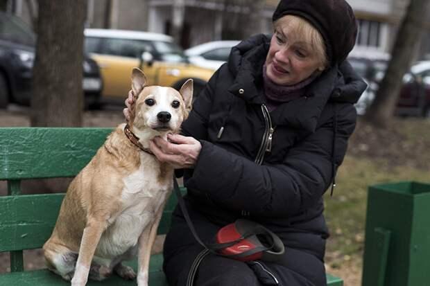 """Взяла пса на «доживание», а он встал на ноги и бегает за кошками..."""