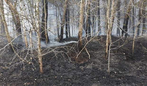 Из-за грозы вТюменской области произошло 5 природных пожаров