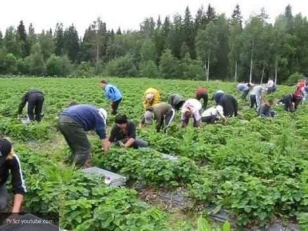 Запад «соскучился» по гражданам Украины: Европе срочно нужна дешевая рабочая сила