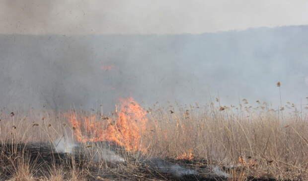 В Свердловской области продолжаются лесные пожары