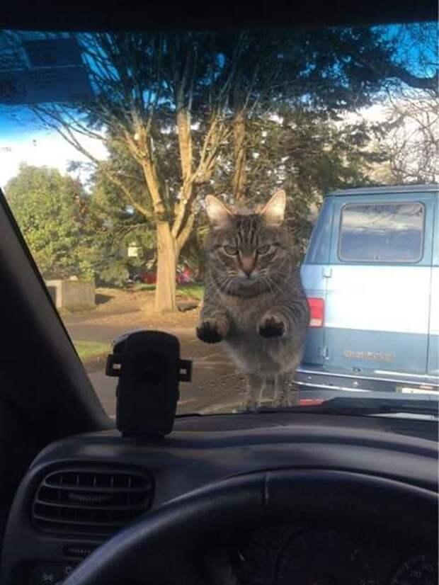 Пользователи Сети делятся фото своих котиков, которые слишком забавны, чтобы скрывать их от человечества
