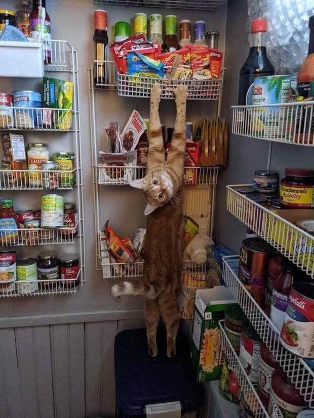 12 котов, решивших отложить свои манеры в сторону и уйти в отрыв