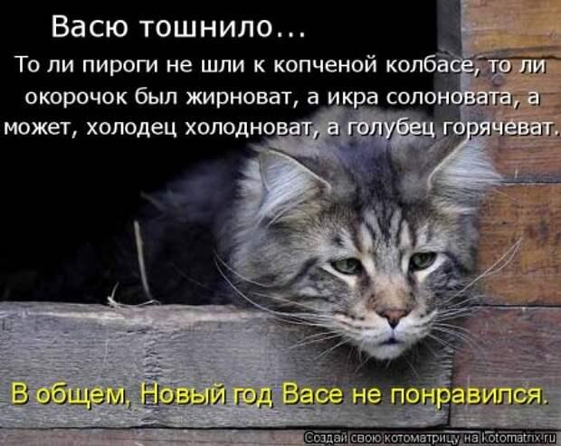 1451492432_kotomatritsa_em