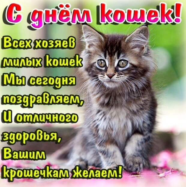 8 августа - Всемирный день кошек.