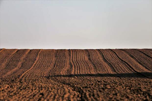 После гибели сельхозкультур из-за жары в Удмуртии стали сеять больше озимых