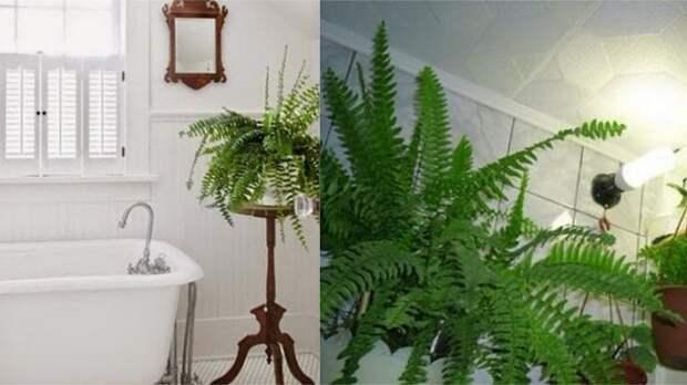 теневыносливые и влаголюбивые растения