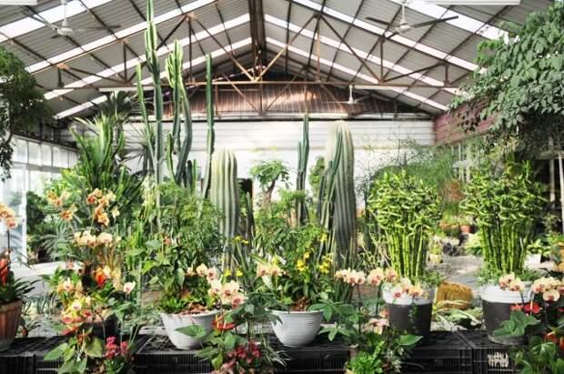 Уютный зимний сад