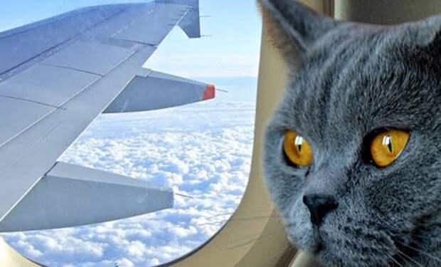 Суданский самолет пошел на вынужденную посадку, поскольку в кабину к пилотам пробрался кот