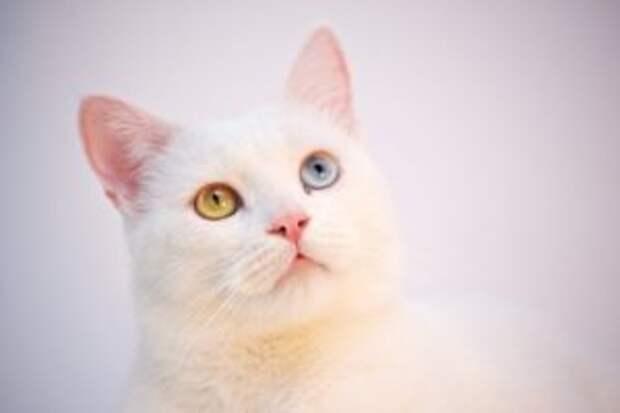 """Люди решили, что в новом доме нет места для старой кошки и """"забыли"""" ее при переезде"""