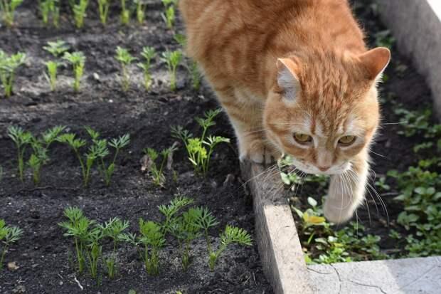 Работы в саду в октябре - рассказваю что нужно делать