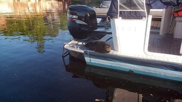 Крошик катался на катере и фотографировался с людьми Фото: vk.com/sealrescue