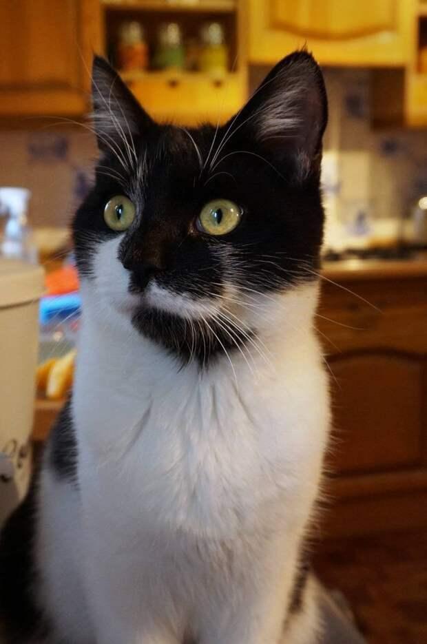 Котенка купили онлайн и бросили через неделю… Но нашлись и те, кто его полюбил по-настоящему!
