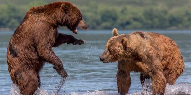 В Челябинске возбудили дело из-за отравления медведей