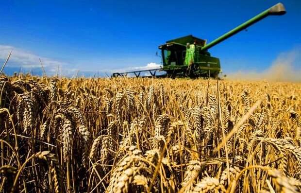 В 2020 году в регионе произвели сельскохозяйственной продукции почти на 53 миллиарда рублей