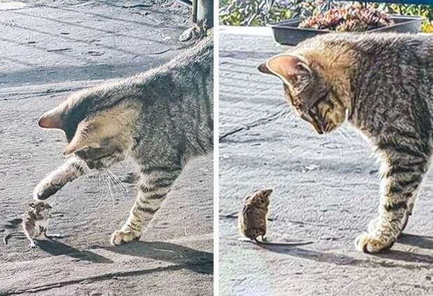 22 котика, вкоторых внезапно проснулся охотничий инстинкт, ноони забыли как это делается