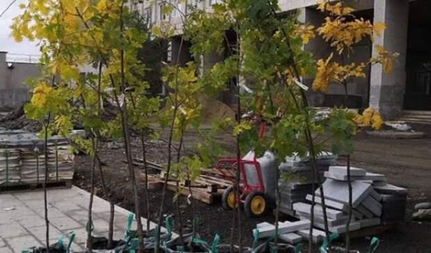 2,6 тысячи кустов кизильника будут высажены на «Тагильской лагуне-2»