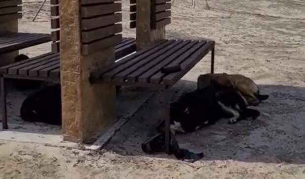 Ростовчане пожаловались наатаковавших новый парк собак наЗеленом острове