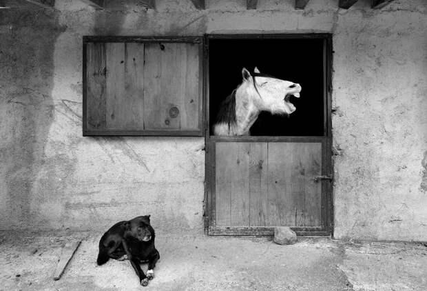 «Улыбнитесь!» 13 фото животных, которые поднимут ваше настроение за 1 минуту