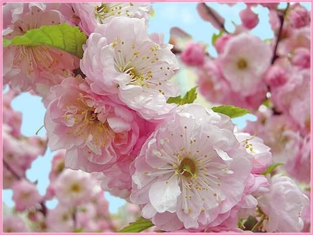 Фотографии цветущего сада снизу - Профессиональные фотографи…