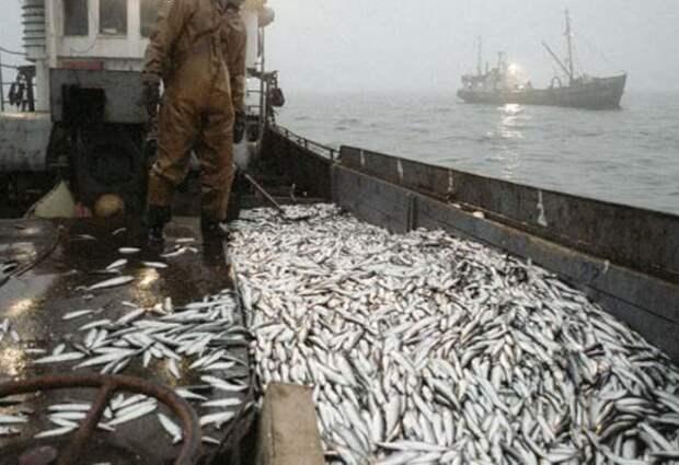 рыба, рыба украина, рыбный промысел украины, рыболовство украины, министерство рыбного промысла украины, рыболовное хозяйство украины
