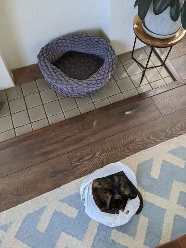 25 странных мест, ставших кошачьей спальней