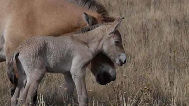 Ученые сфотографировали табун уникальных лошадей в Чернобыле