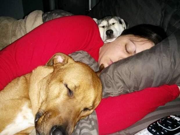 15 трогательных фото, доказывающих, что собака — самое трогательное и любящее существо на планете!