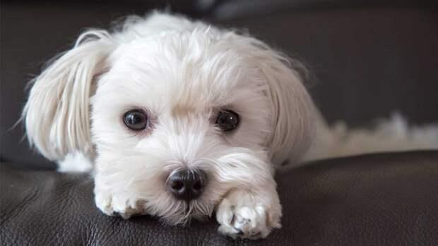 Самым занятым: топ-7 собак для тех, кого часто нет дома