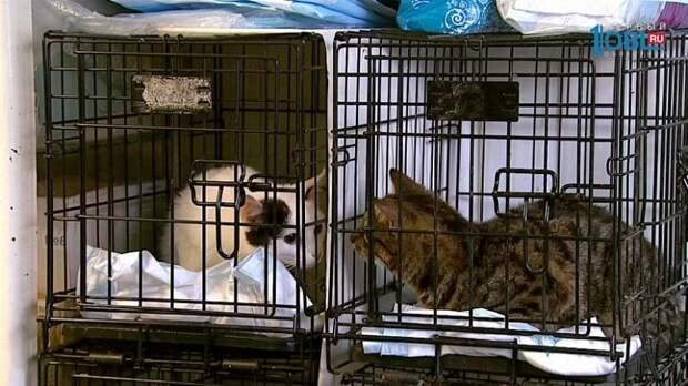В Челябинске две кошки едва не погибли, оставшись в салоне легковушки на неделю