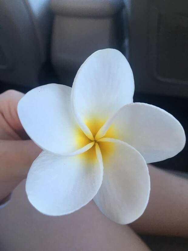 Идеальный цветок с Гавайев