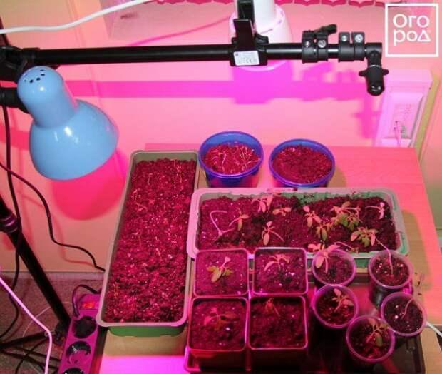 Досвечивание рассады помидоров