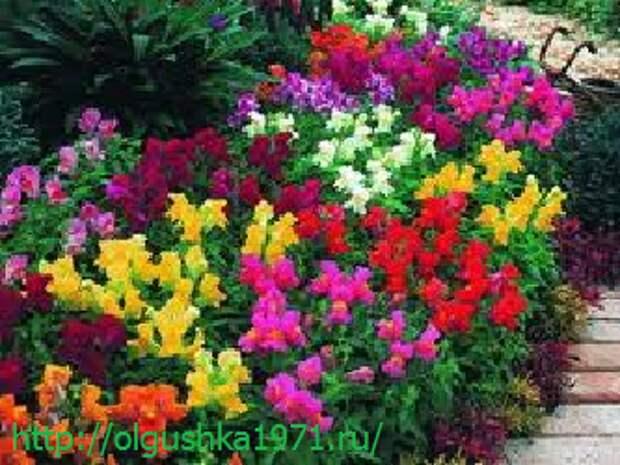 Многолетние садовые цветы, цветущие всё лето. Категории и описания с фото
