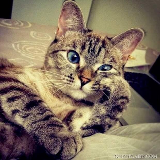 Как разобраться в личности кота