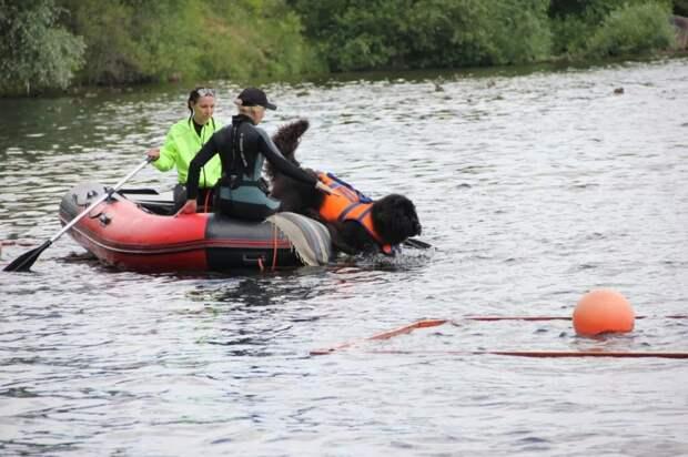 На водоёмах столицы со спасателями будут дежурить четвероногие помощники