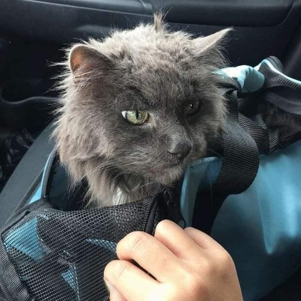 20-летнего кота сдали в приют. Он притих и грустил, не понимая, за что его предали