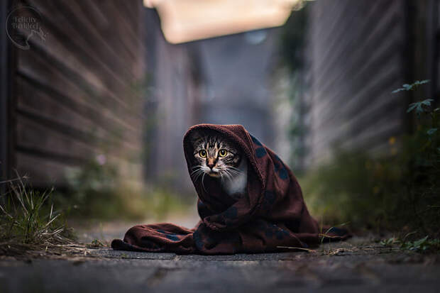 In the Alley by Felicity Berkleef on 500px.com