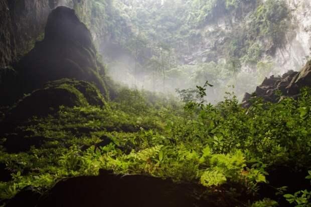 forests40 Леса с другой планеты!